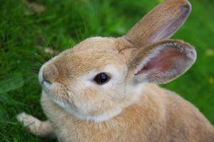 1097761_rabbit
