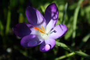 956380_purple_flower