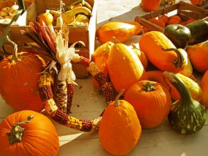 1106973_autumn_gourds_and_such